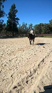 Horse lease wanted Wattle Grove area Wattle Grove Kalamunda Area Preview