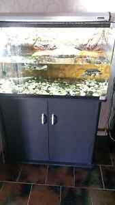 3ft oversize reptile/turtle tank cheap quick 200 Brahma Lodge Salisbury Area Preview