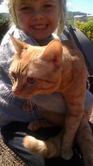 Giveaway Rescued ginger male cat