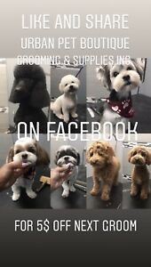 Dog&cat Grooming  Friday Saturday Sunday appointments available