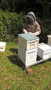 FREE Bee Swarm Removal Buderim 4556  +10km Buderim Maroochydore Area Preview