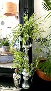 INDOOR PLANT SALE Wavell Heights Brisbane North East Preview