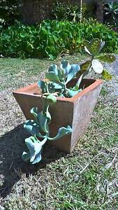 Assorted succulents in terracotta pot Beaconsfield Fremantle Area Preview