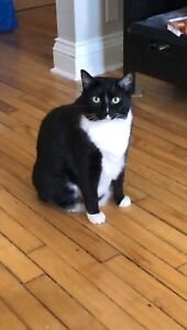 7 YEAR OLD MALE CAT TO GOOD HOME!