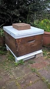 Bee Hive - 10 Frame Brood Box Botany Botany Bay Area Preview