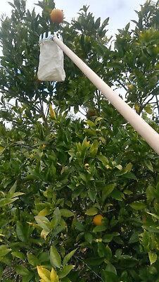 Pareja de RECOGEDORES de fruta en árbol. Con mango 1,20