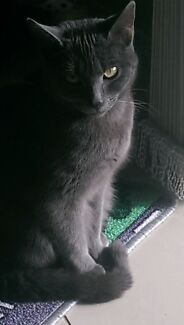 Adorable Fifi looking for forever home. Craigieburn Hume Area Preview