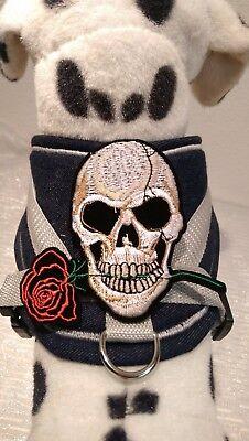 Softgeschirr Gr. M,  Halsband, Chihuahua, Brustgeschirr, Jeans Totenkopf Name