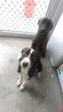 2 puppies to rehome Mount Low Townsville Surrounds Preview