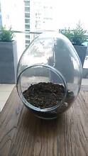 Large Egg Glass Terrarium with Pebble & Soil St Leonards Willoughby Area Preview