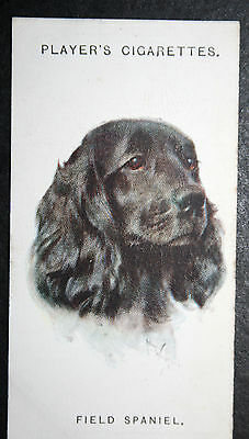 Field Spaniel   1920's Original Vintage Picture Card