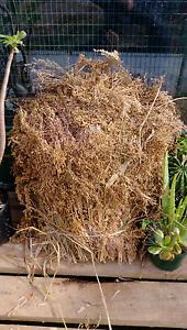 Dakota millet sprays for finches n birds. St Albans Brimbank Area Preview