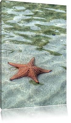 Seestern Kunst (Seestern im klaren Wasser Leinwandbild Wanddeko Kunstdruck)