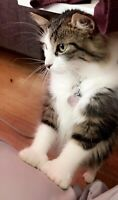 Looking for a furever home- Recherche famille