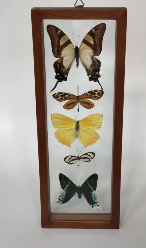 Vintage Framed 5 Butterfly Taxidermy Double Glass Wall Art Made in Peru