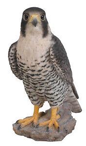 Vivid Arts - REAL LIFE BIRDS - Peregrine Falcon Bird Of Prey