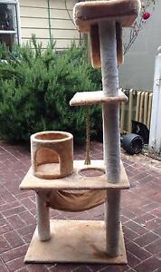 Cat scratch post Ringwood Maroondah Area Preview