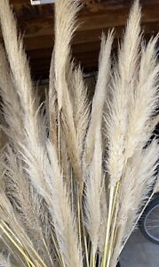 Pampas Grass Home Decor Gumtree Australia Free Local Classifieds