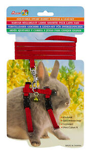 Dwarf-Rabbit-Harness-Set-5-Colours-Suitable-for-Lizards-Dogs-Cats-Adjustable