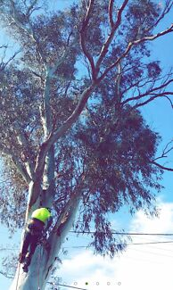 Chop Blokes Choppers Tree Removal Stump Grinding Services. . . .  Camden Camden Area Preview