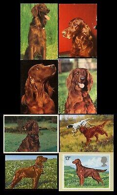 IRISH RED SETTER GUNDOG DOG PHOTO POSTCARDS - 8 X Modern Cards