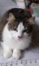 URGENT URGENT RESCUED BABY GIRL NEED A CARING  FOREVER HOME Riverwood Canterbury Area Preview