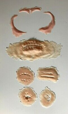 SFX Prosthetic zombie jaw, brow & cheekbone set](Sfx Prosthetics)