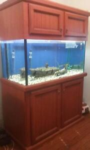 Fish Tank 6ft high 4ft wide Ganmain Coolamon Area Preview