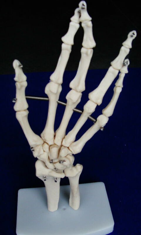 Model Anatomy Professional Medical Hand Joint Life Size IT-013 USA ARTMED