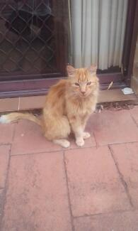 2 cats great natured free to a good home