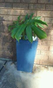 Large blue pot /plant