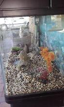 fish tank. aqua one 850 curved glass aquarium 165 l Macclesfield Mount Barker Area Preview