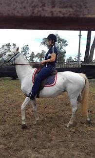 Quiet mare