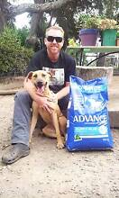 RESCUE DOG CHOOK. 2yr ridgeback cross Picton Wollondilly Area Preview