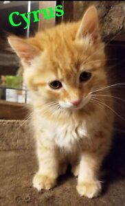 Cyrus is a sweet boy looking for a mama!