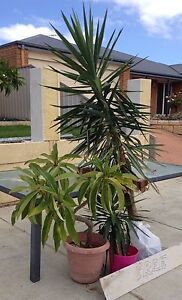 Free plants Wanneroo Wanneroo Area Preview