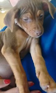 Puppy for sale, available today!