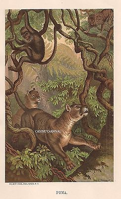 AMAZING 1885 Chromolithograph  PUMA HUNTING MONKEYS ANTIQUE VINTAGE COLOR PRINT
