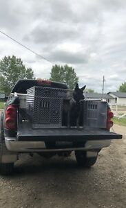 Aluminum Dog Crates, Hunting Dogs, Hound Dogs, Dog Kennels