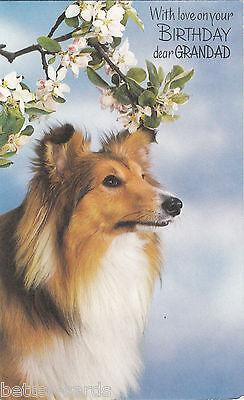 Happy Birthday Grandad Vintage 1970's Shetland Sheepdog Puppy Greeting Card dog