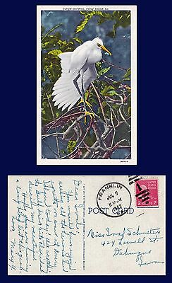 US LOUISIANA ORNITHOLOGY BIRD JUNGLE GARDENS AVERY ISLAND POSTED 1952 TO DUBUQUE