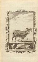 1785 Copper Engraving - Buffons Natural History. , Iceland Ewe , - natura - ebay.co.uk