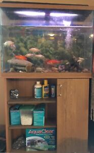 Fish tank, all accessories and fish!