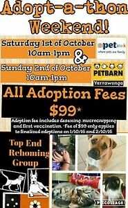 Adopt-a-thon weekend! Darwin CBD Darwin City Preview
