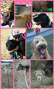 Experienced dog first aid trained pet sitter :-) Woy Woy Gosford Area Preview