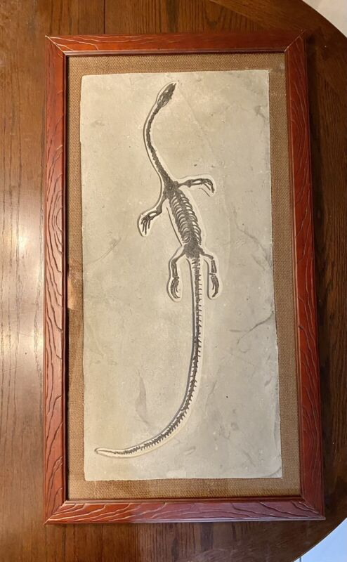 Hyphalosaurus Lingyuaneasis BIG Dinosaur fossil framed SAFE AND FAST SHIPPING.