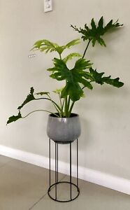 Indoor plants potted with stand. Price is firm