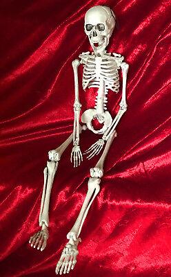 Halloween Bewegliches Menschliches Skelett 50cm Deko Knochen Grusel Gerippe