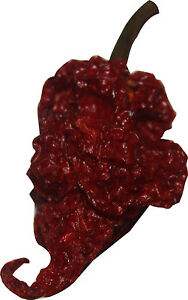 10-Dried-Whole-Scorpion-Chili-Pepper-Trinidad-Moruga-Seed-Pods-Red-Tail-2-Free