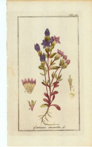 "6 Botanical Herbal Prints from ""Pictures of Medicinal Herbs"" Published in 1798"